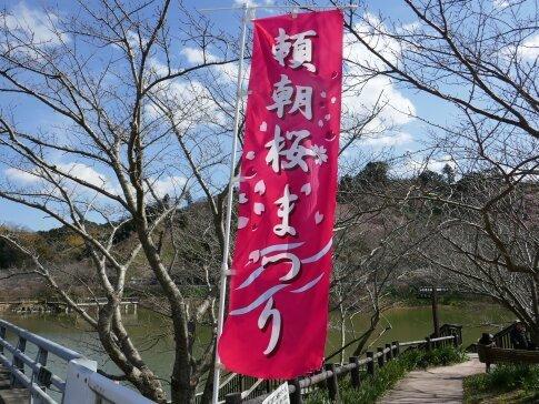 佐久間湖の河津桜6.jpg