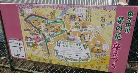 免々田川菜の花・桜まつり.jpg