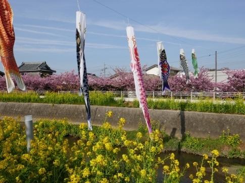 免々田川菜の花・桜まつり4.jpg
