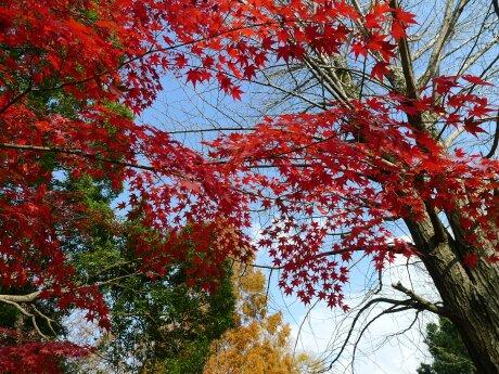 北浦和公園 紅葉2.jpg