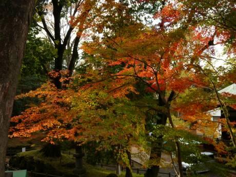 喜多院 紅葉2010.jpg