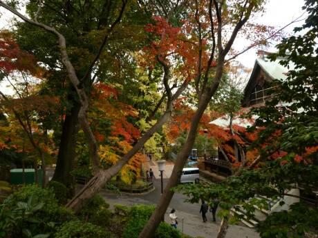 喜多院 紅葉2010 2.jpg