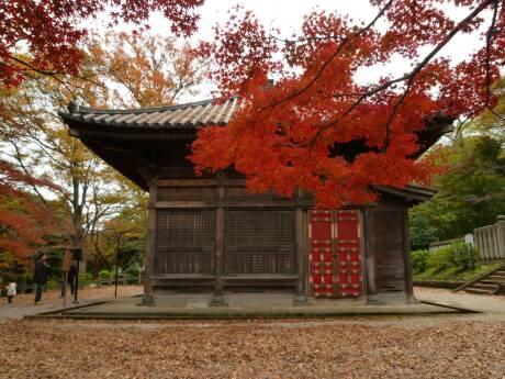 喜多院 紅葉20103.jpg