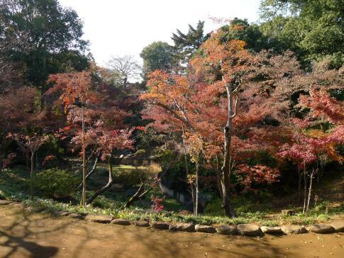 喜多院庭園の紅葉.jpg