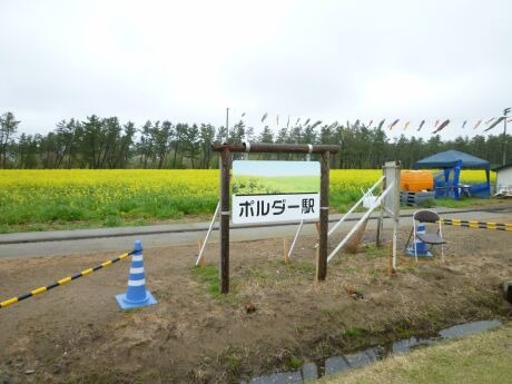 大潟村菜の花祭り4.jpg