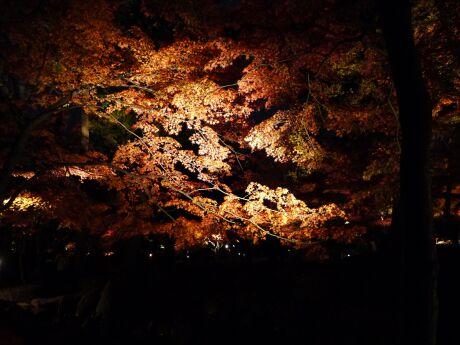 大田黒公園の紅葉2.jpg