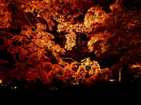 大田黒公園の紅葉3.jpg