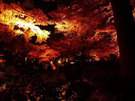 大田黒公園の紅葉4.jpg