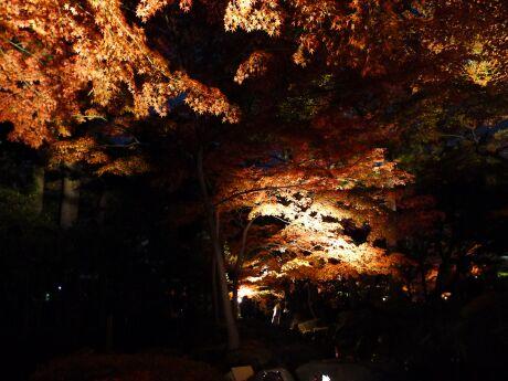 大田黒公園の紅葉1.jpg
