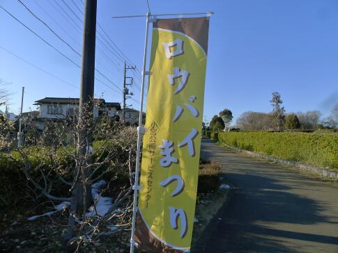 小宮公園のロウバイ.jpg