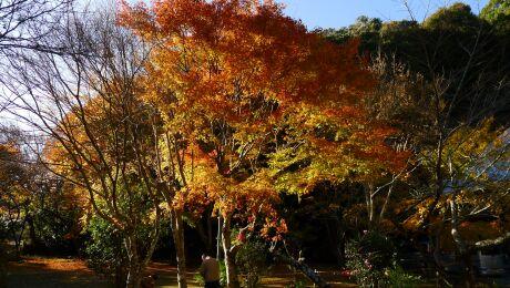 小松寺 紅葉3.jpg