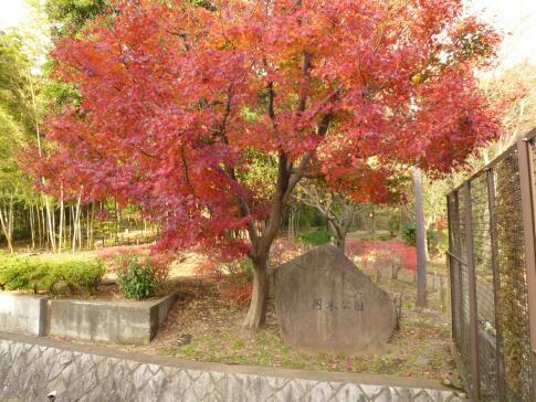 岡本公園の紅葉.jpg