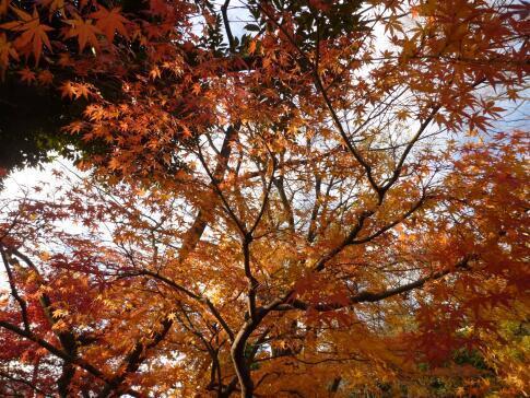 岡本公園の紅葉3.jpg