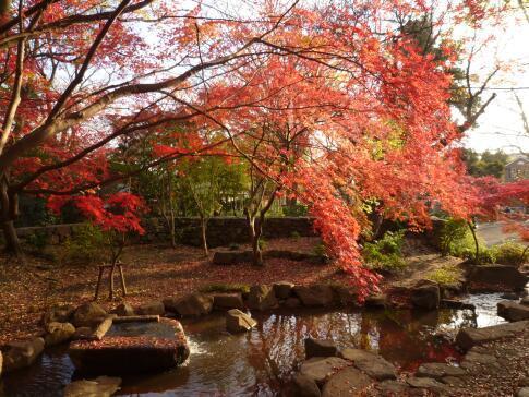 岡本公園の紅葉6.jpg