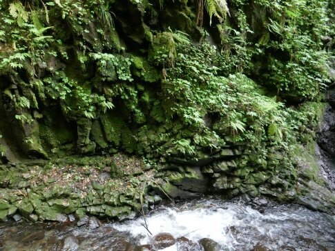 岩室の滝4.jpg