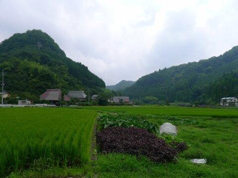 後藤又兵衛の墓3.jpg