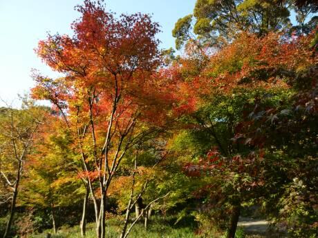 徳川園6.jpg