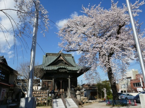 慈眼寺の桜201904.jpg
