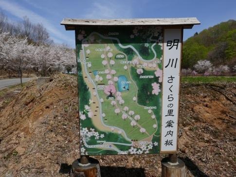 明川さくらの里.jpg