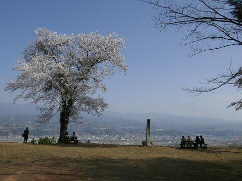 松岡城址 桜2.jpg