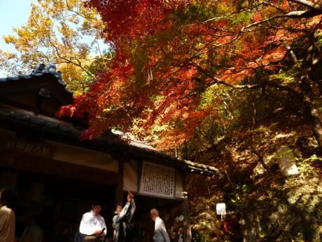 桃太郎神社 紅葉2.jpg