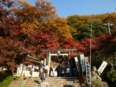 桃太郎神社 紅葉1.jpg