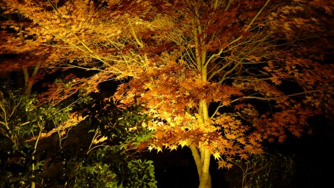 桜山公園の夜景3.jpg