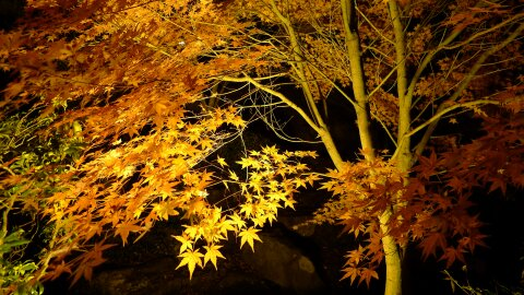 桜山公園の夜景4.jpg