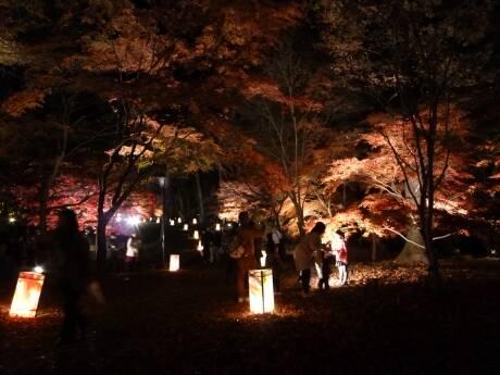 森林公園 紅葉見ナイト2.jpg