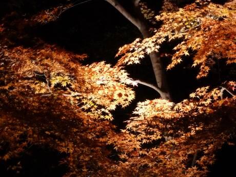 森林公園 紅葉見ナイト3.jpg