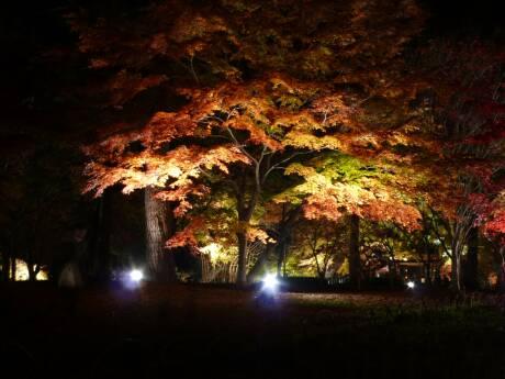 森林公園 紅葉見ナイト4.jpg