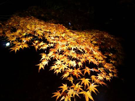 森林公園 紅葉見ナイト5.jpg