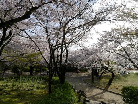 清洲公園.jpg