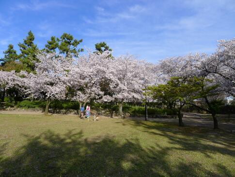 清洲公園2.jpg