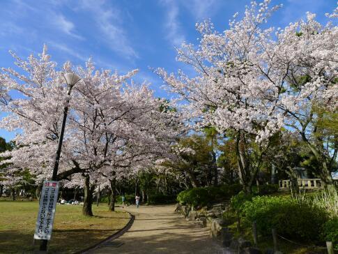 清洲公園3.jpg
