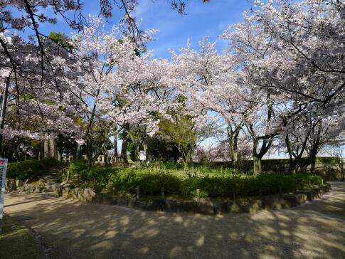 清洲公園4.jpg