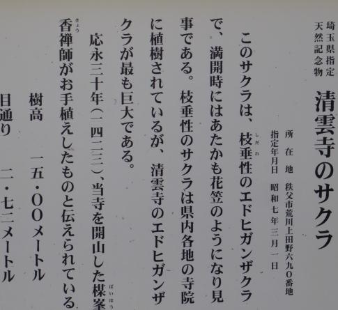 清雲寺の桜.jpg