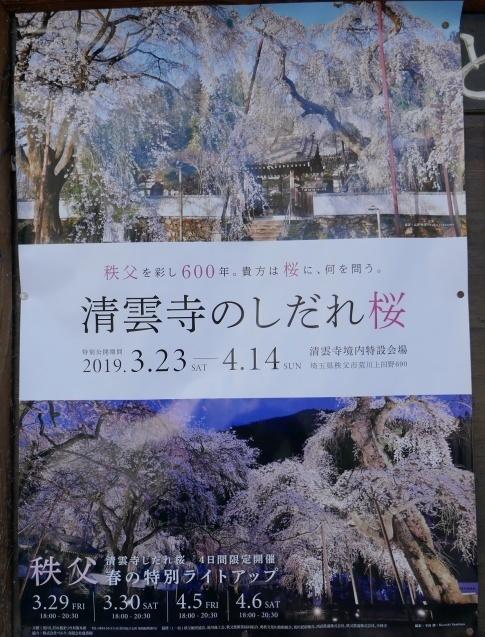 清雲寺の桜ポスター.jpg