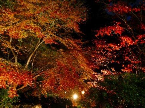 熱海梅園ライトアップ2.jpg