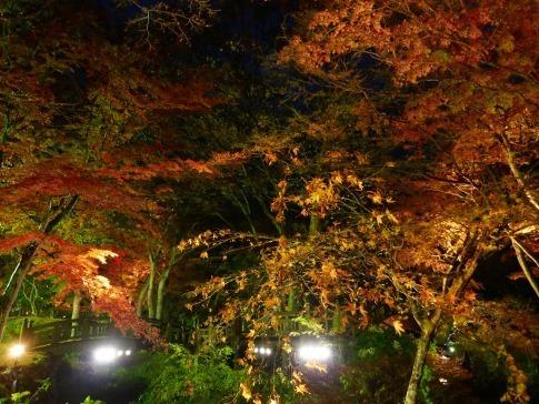 熱海梅園ライトアップ4.jpg
