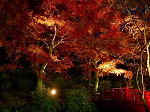 熱海梅園ライトアップ6.jpg