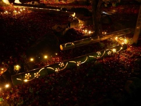 熱海梅園ライトアップ9a.jpg