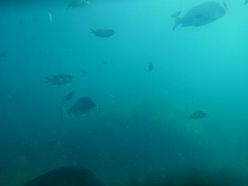 玄海海中展望塔3.jpg
