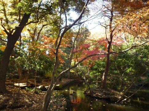 石神井記念庭園の紅葉2.jpg