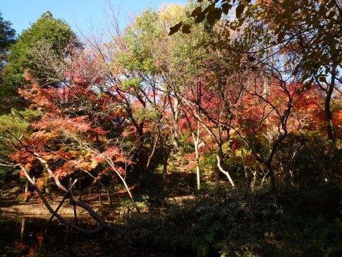 石神井記念庭園の紅葉3.jpg