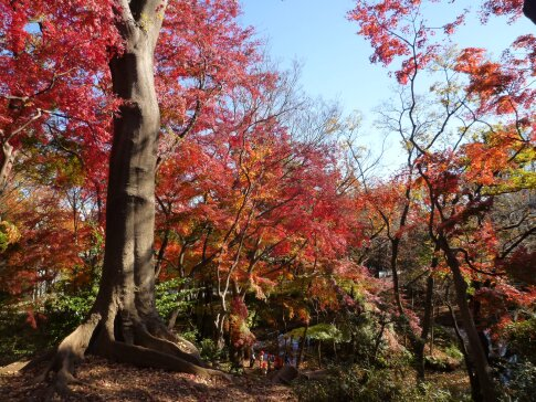 石神井記念庭園の紅葉6.jpg