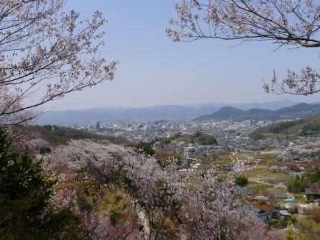 花見山7.jpg