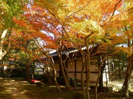 覚苑寺の紅葉4.jpg