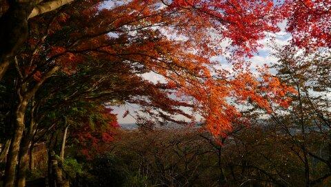 謙信平紅葉201302.jpg