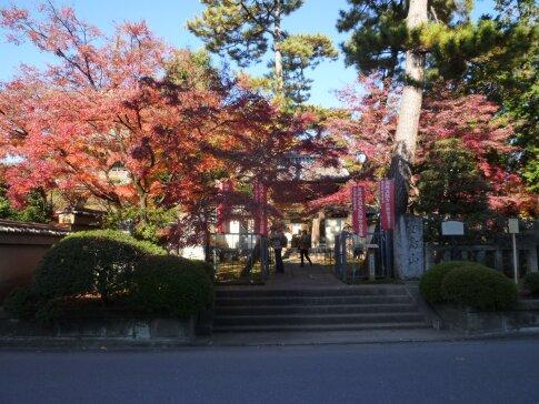 道場寺の紅葉1.jpg